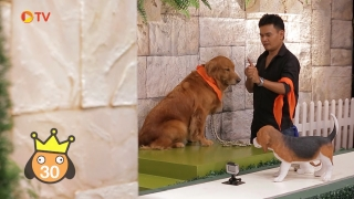 The Dog Partner EP 02