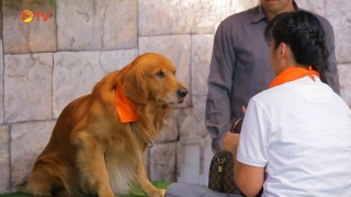 The Dog Partner EP 04