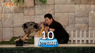 The Dog Partner EP 06