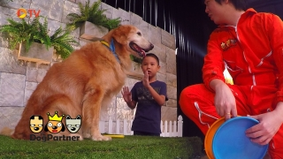 The Dog Partner EP 15