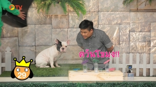The Dog Partner EP 16