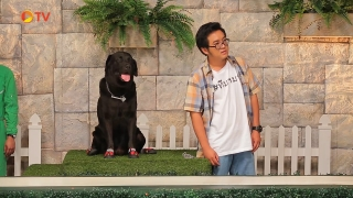 The Dog Partner EP 20