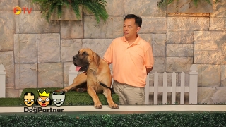 The Dog Partner EP 21