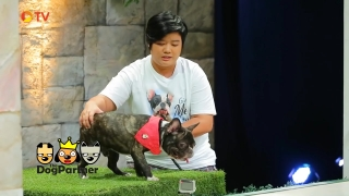The Dog Partner EP 48