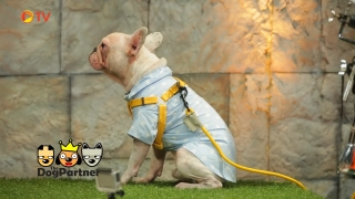 The Dog Partner EP 54 9 ต.ค. 2559